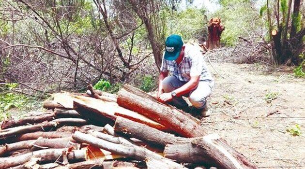 Reportan presentación de permiso irregular para tala en Tumbes
