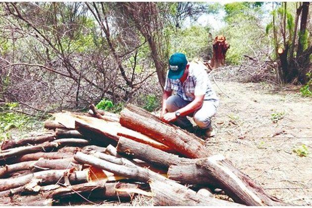 Reportan permiso irregular para tala en Tumbes