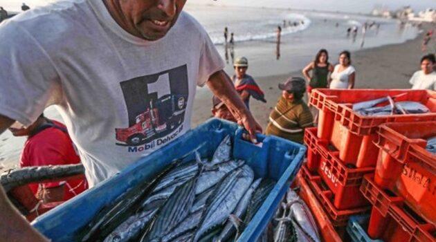 Pesca de consumo humano de Tumbes y Piura podría estar en riesgo