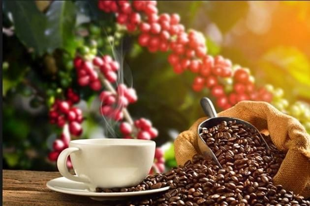 Para reactivar la producción del café se invertirán 220 millones de soles