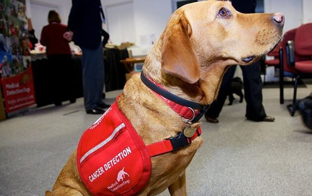 Pueden los perros detectar el cáncer en humanos