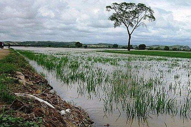 Agricultores indignados por posibles pérdidas en arroz, mango y uva
