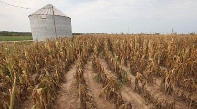 Sequía en la región podría causar pérdidas millonarias