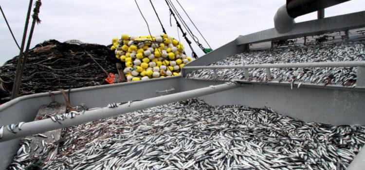 Sector pesquero avanzó un 94,1% en el mes de julio